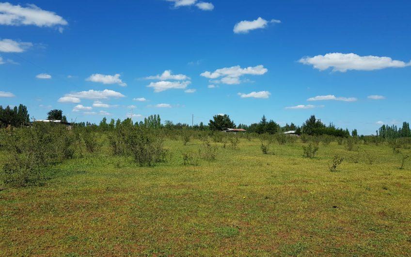 Vendo hermoso campo agrícola Pedregal